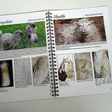 voorbeeld van de beschrijving van de wol per schapenras